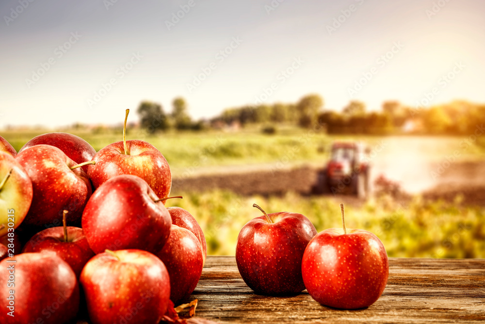 Fototapety, obrazy: Fresh apples and autumn time