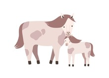 Horse And Foal Or Colt Isolate...