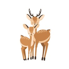 Deer With Fawn Isolated On Whi...