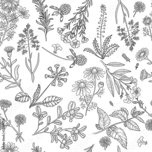Herbs pattern Canvas Print