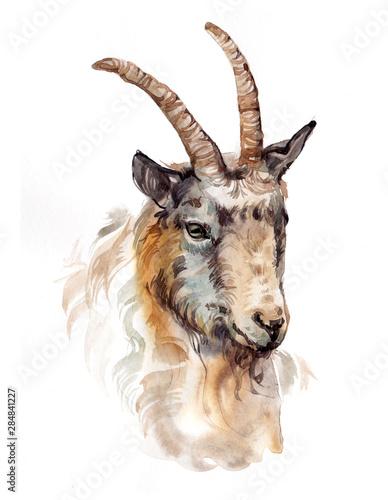 Canvastavla Watercolor single goat animal isolated on a white background illustration