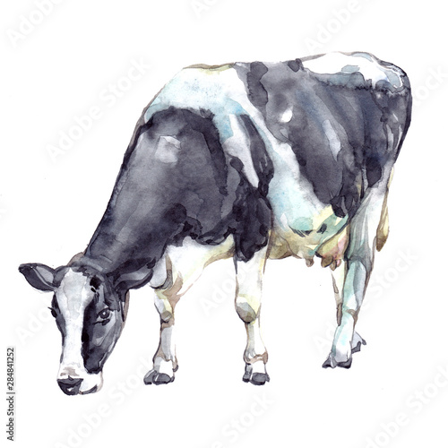 Fotomural Watercolor single cow animal isolated on a white background illustration