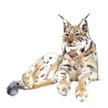 Watercolor Single Lynx Animal ...