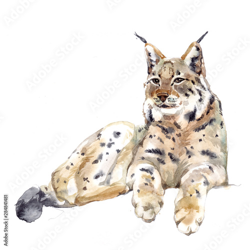 Canvas Print Watercolor single lynx animal isolated on a white background illustration