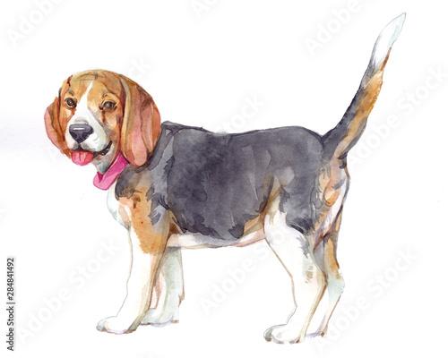 Watercolor single Dog animal isolated on a white background illustration Fototapete