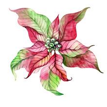 Big Christmas Poinsettia Flowe...