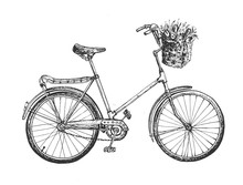 Sketchy Style City Bicycle For Lady