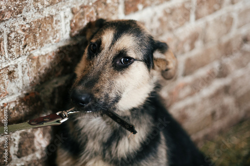 Photo  Cute scared dog looking from cage in old shelter, waiting for someone to adopt