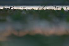 Mallard Duck And Vegetation In Water