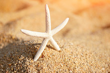 A White Starfish On The Sand On A Hot Sunny Day