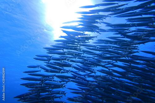 Papel de parede 沖縄宮古島の海中のカマスの大群と太陽光