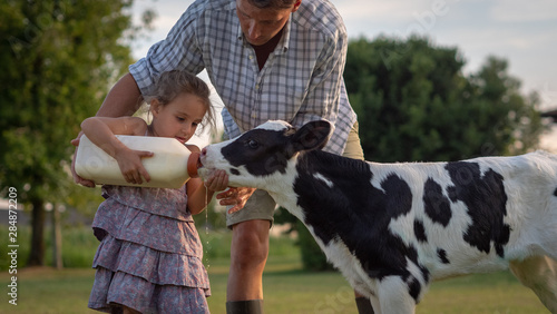 Authentic shot of young farmer father is showing to his little daughter how to feed from the bottle with dummy a newborn calf used for biological milk products industry on a farmland Fototapeta