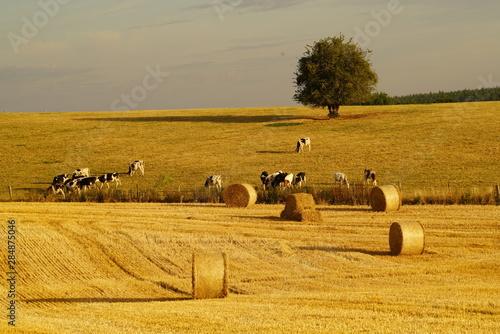 Valokuvatapetti Paysage Campagne 581