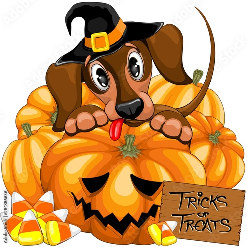Photo Stands Draw Halloween Dachshund Cute with Jack o Lantern and Candies vector illustrations