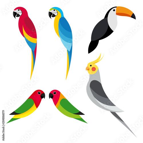 set flat parrot on white background Wallpaper Mural