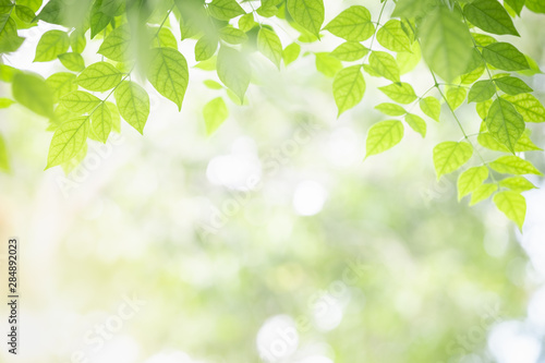 Obraz Close up of nature view green Millingtonia hortensis leaf on blurred greenery background with bokeh and copy space using as background natural plants landscape, ecology wallpaper concept. - fototapety do salonu