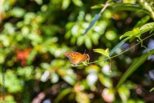 orange butterfly on a leaf
