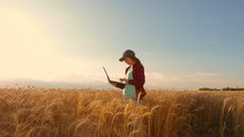 Farmer Girl Works With A Tablet In Wheat Field, Plans A Grain Crop. Agriculture Concept. Woman Agronomist Studies Wheat Crop In Field. Entrepreneur In The Field Of Planning His Income.
