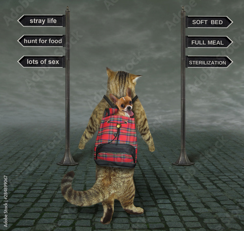 Cuadros en Lienzo  The cat is at a crossroads of the road with signs