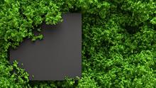 Beautiful Summer Foliage Frame. 3d Illustration, 3d Rendering.
