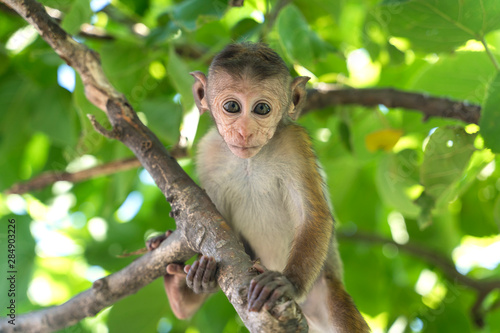 Baby monkey Wallpaper Mural
