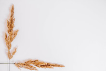 Dry Grass On A White Background. Greeting Card Concept, Place For Text. View From Above