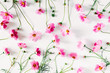 Leinwandbild Motiv Beautiful flowers composition. Pink cosmos flowers on white background. Flat lay, top view, copy space