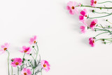 Fototapeta Kwiaty - Beautiful flowers composition. Pink cosmos flowers on white background. Flat lay, top view, copy space