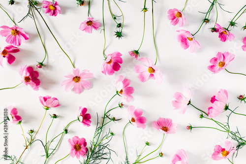 Cadres-photo bureau Univers Beautiful flowers composition. Pink cosmos flowers on white background. Flat lay, top view, copy space