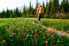 A Woman Hiking, Siyeh Pass Hike, Glacier National Park, Montana, USA