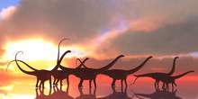 Diplodocus Dinosaur Reflection...