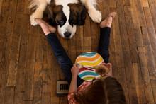St. Bernard Dog Sits On Floor With Little Girl Begging For Food