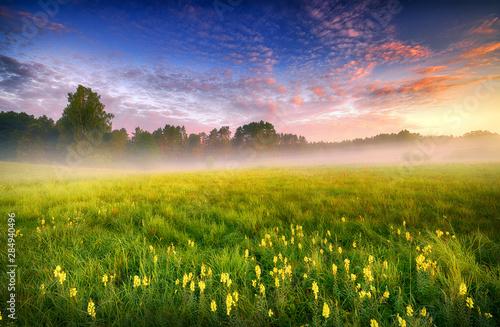 Foto auf Gartenposter Landschappen Beautiful summer foggy morning landscape