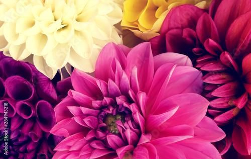 Canvas Prints Dahlia Colorful flowers arrangement card background