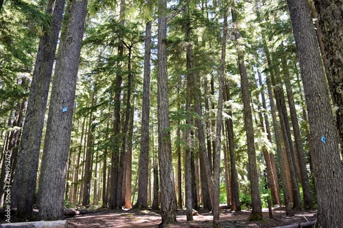 Deep Forest Lit by Sunshine at Black Canyon Campground, Oregon