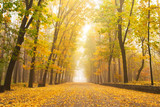 Fototapeta Perspektywa 3d - Beautiful romantic alley in a park with colorful trees and sunlight.
