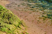 A Fragment Of A Sea Beach Cove...