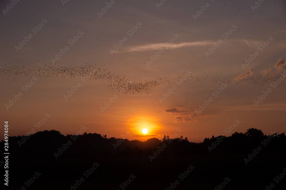 Bats flying out of cave in the evening with scene of sunset in thailand a beautiful sky for halloween theme or scary movie