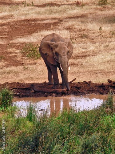Elephant at Watering Hole Wallpaper Mural