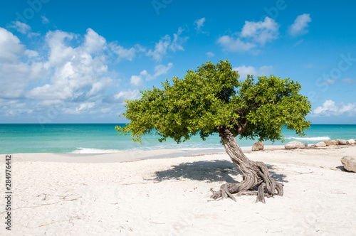 The iconic divi divi tree on the white sand of Eagle Beach at the Caribbean island Aruba фототапет