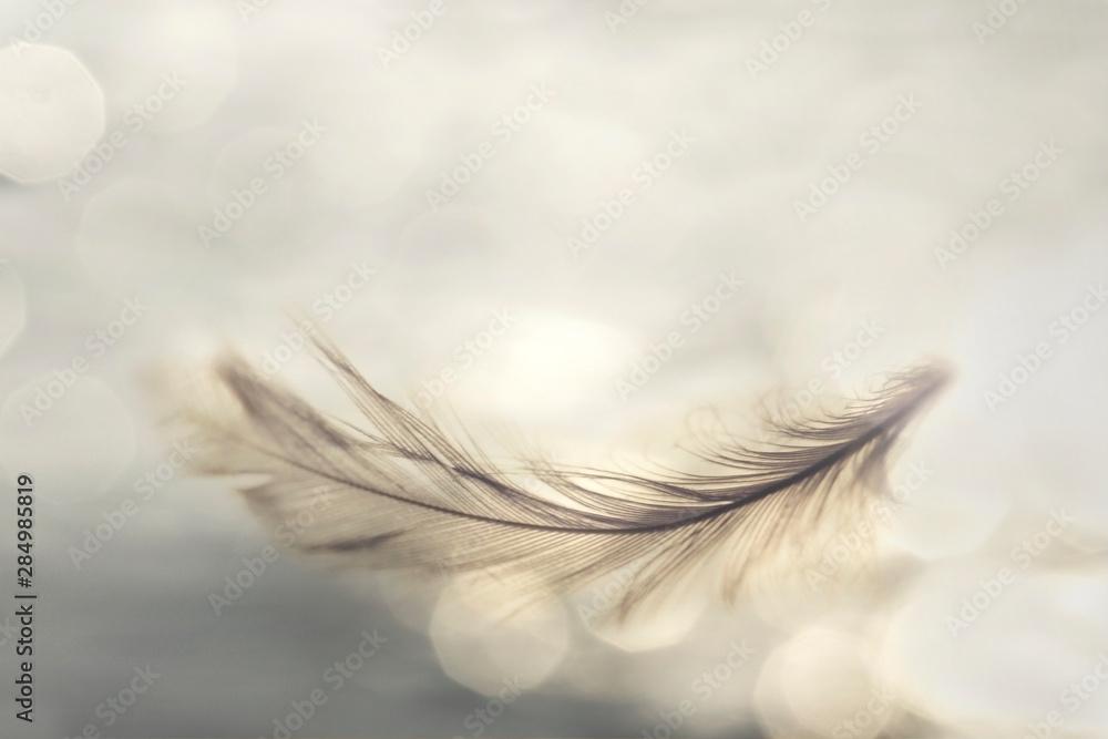 Fototapeta feather flies gently into the sky, concept of lightness