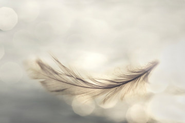 feather flies gently into the sky, concept of lightness