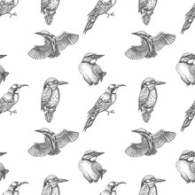 Sketch Hand Drawn Pattern With Kingfisher, Blue Jay, Bee-eater. Animals Illustration Birds.