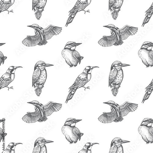Sketch hand drawn pattern with kingfisher, Blue jay, bee-eater Fototapete