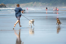 A Man Frolics With His Dogs Ru...