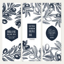 Olive Oil Vertical Design Templates. Packaging Label Collection. Vector Illustration