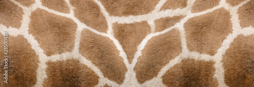 Photo  Giraffe skin Texture - Image 1