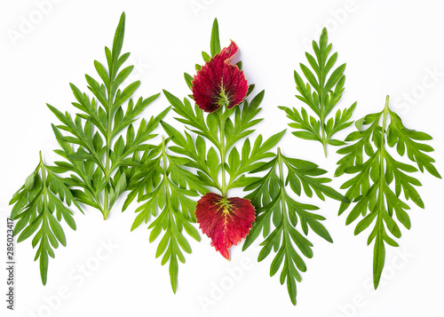 obraz lub plakat Fresh green and red leaves isolate on white background