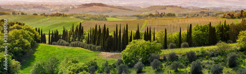 Foto auf Leinwand Schwarz beautiful Tuscan landscape with cypress and olive trees at sunset near Siena. Italy