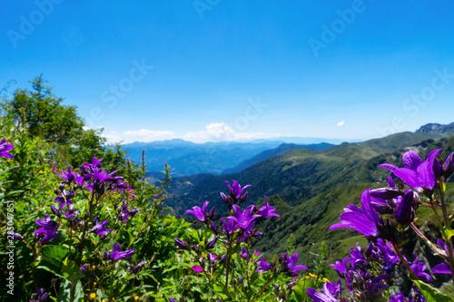 Campanelli Fiori.Belli Fiori Campanelli Viola In Montagna Alpi Buy This Stock